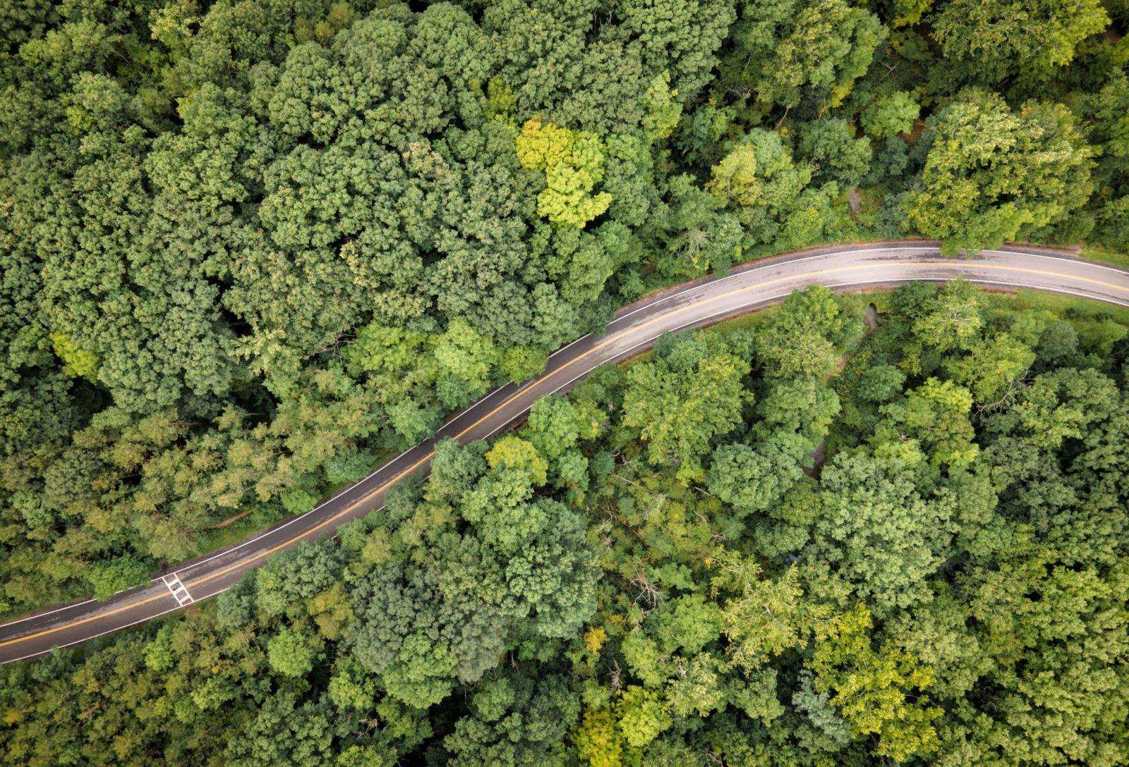 Foresta Verde Attraversata Da Una Strada